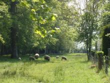 Campagne de Sommervieu - Vers le chemin du bois